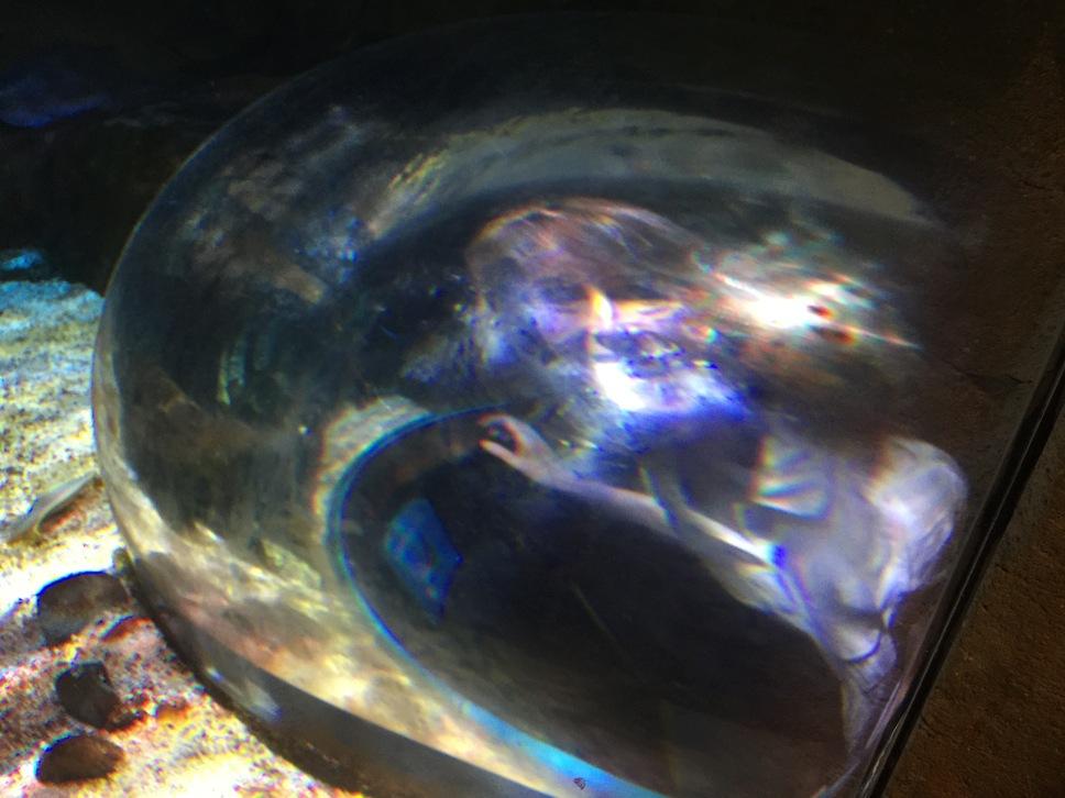 sherrie-aquarium