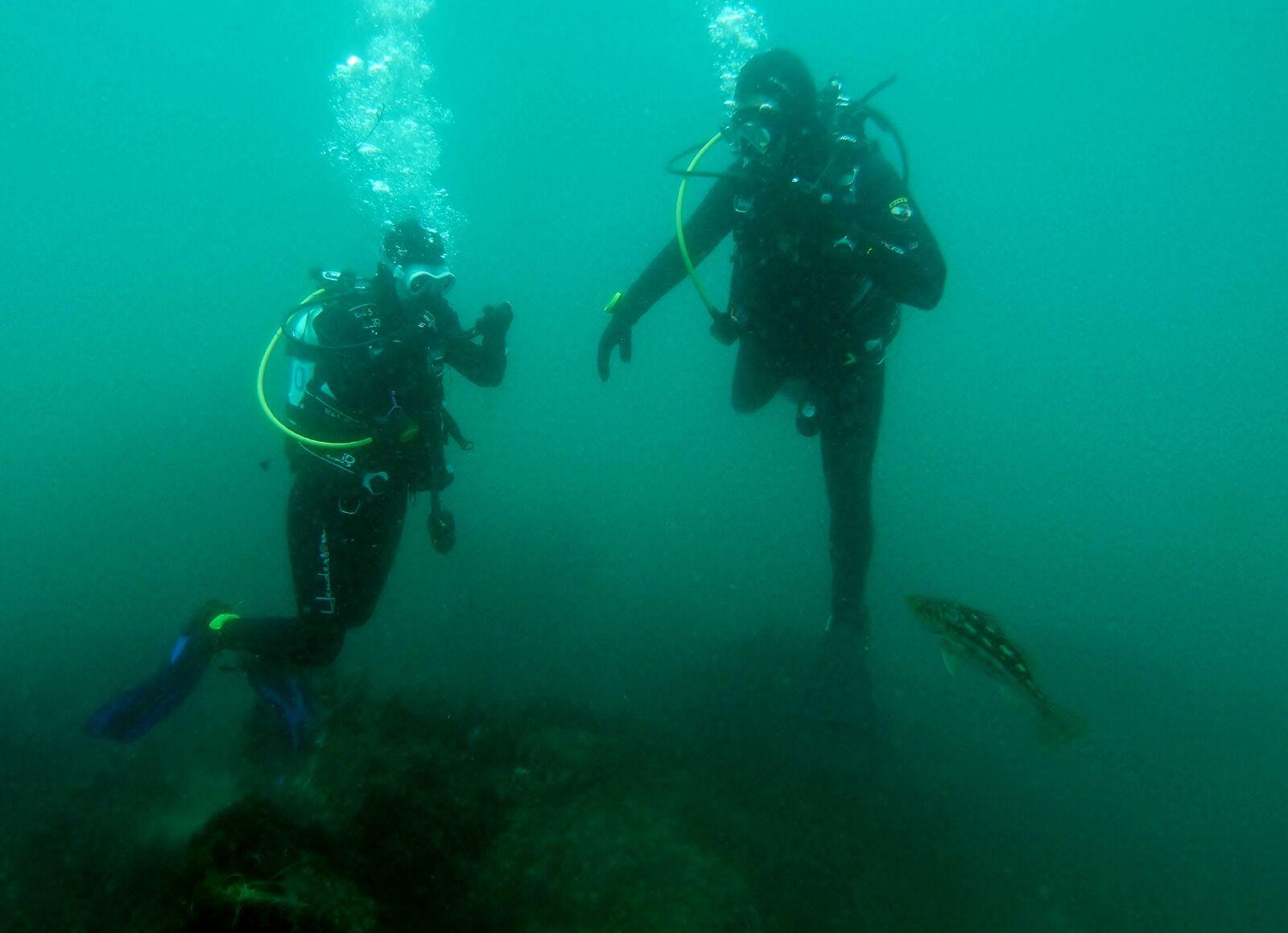 sherrie-michael-diving-la-jolla