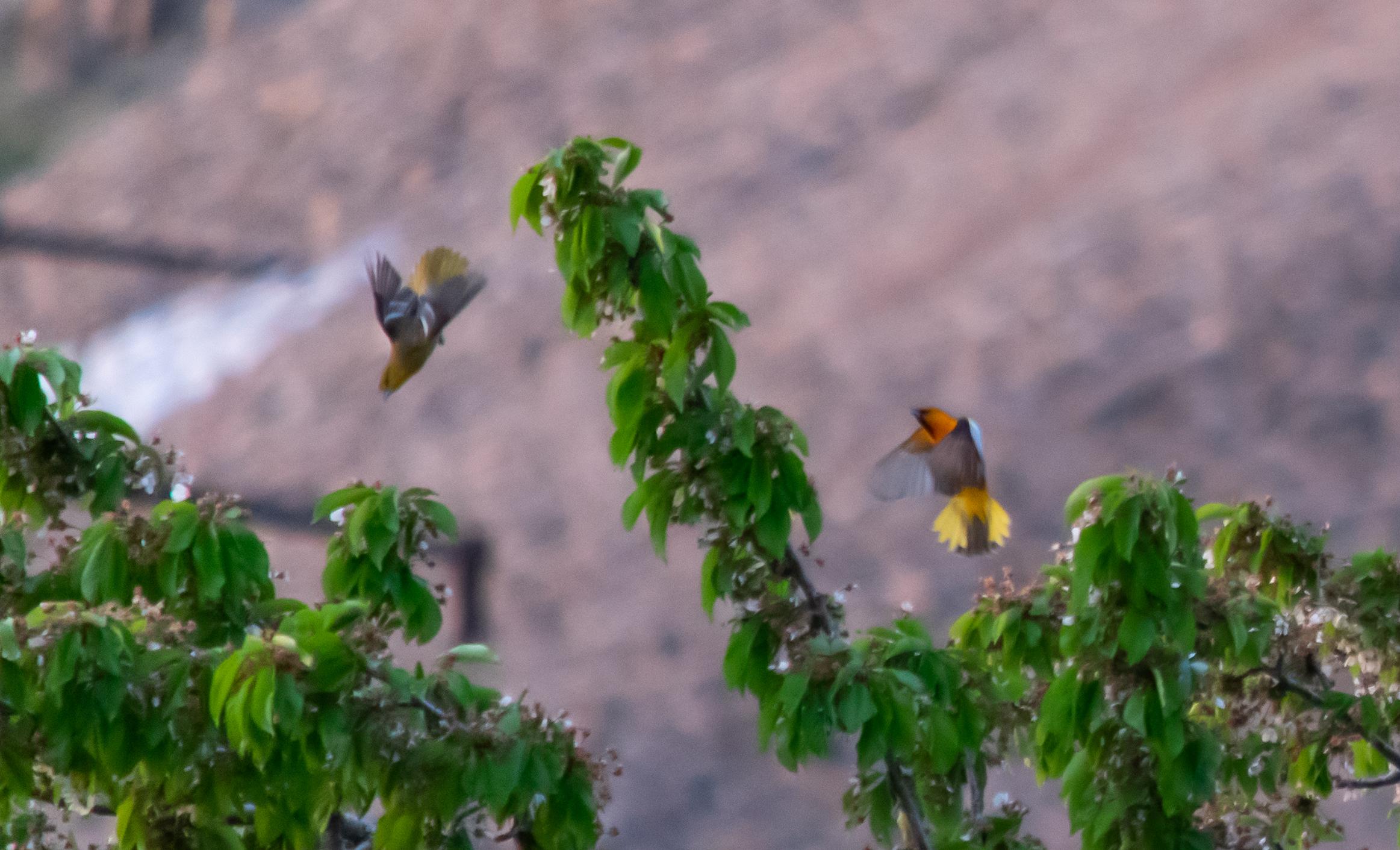 2020-05-01-BirdOlympics